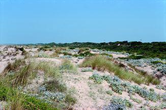 Foto Dune