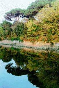 Parco di Castelfusano